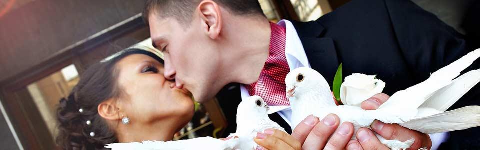 Hochzeitstauben in Hof und Umgebung
